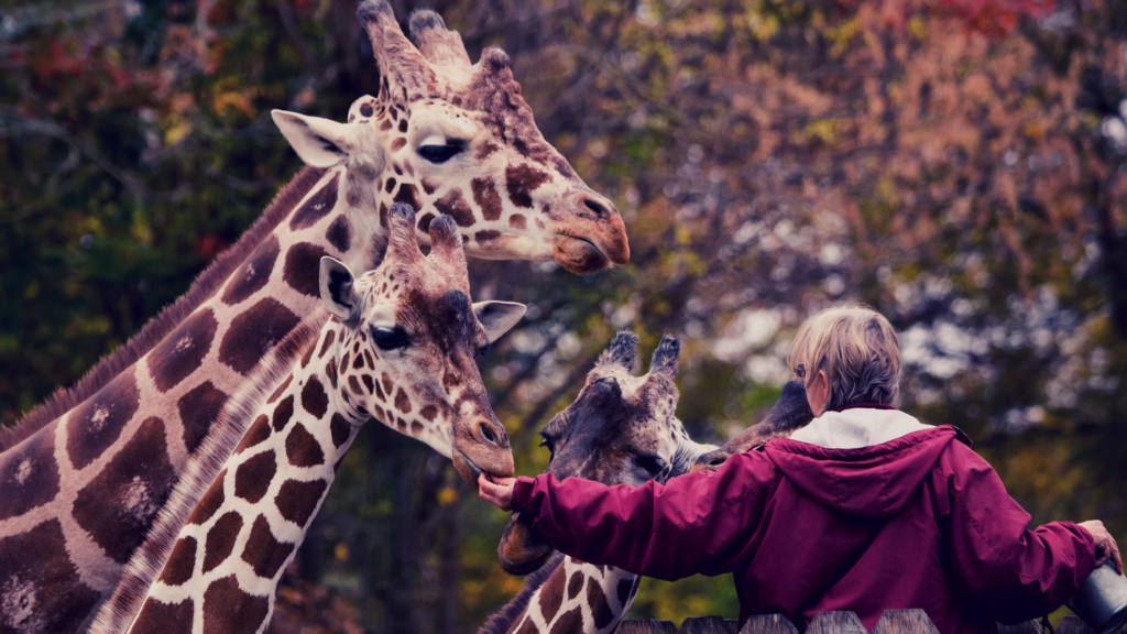 Zoo Science Zoo Keeper - featured image